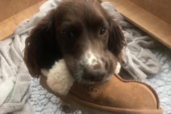 Hound Untrasound Shoe